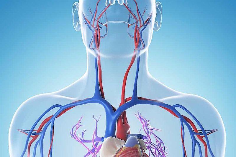 Blutgefäße - Diagnosezentrum Mödling